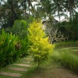 Lush tropical garden — Stock Photo