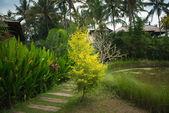Lush tropical garden — Stock Photo