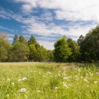 Stock Photo: Nature summer landscape