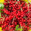 Berries of red viburnum in bucket — Stock Photo