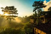 Sunrise over jungle — Stock Photo
