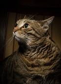 Velká kočka na židli — Stock fotografie