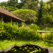 Lotus pond in Indonesian park — Stock Photo