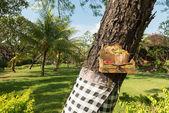 Tradicionais ofertas em bali — Fotografia Stock