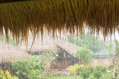 Pouring tropical rain — Stock Photo
