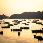 Cat Ba port sunset — Stock Photo #51057011