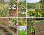 Green Agriculture — Stock Photo