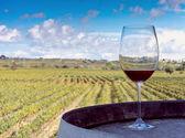 Wine and vineyard — Stock Photo