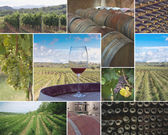 Vineyards and Wineries — Stock Photo