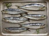 新鲜沙丁鱼 — 图库照片
