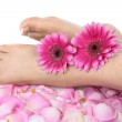 Female feet and flowers over white background — Stock Photo #21736215
