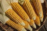 Frische reife Mais wächst im ländlichen Bereich — Stockfoto