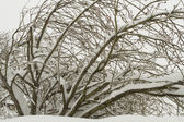 Tree covered in snow — Stock Photo