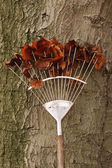 Rake with autumn leaves — Stock Photo