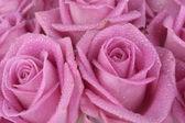 Fleurs de printemps — Photo