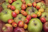 Owoce mieszane — Zdjęcie stockowe