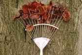 Rake with autumn leaves — Stock Photo