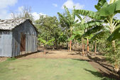 Old metal shed in tropics — Stock Photo