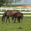 Mare and foal on the green grass — Stock Photo #33541635