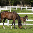 Mare and foal on the green grass — Stock Photo #33541659