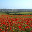 Poppy Field and Brighton — Stock Photo