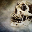 Creepy Skull — Foto de Stock