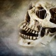 Stock Photo: Creepy Skull