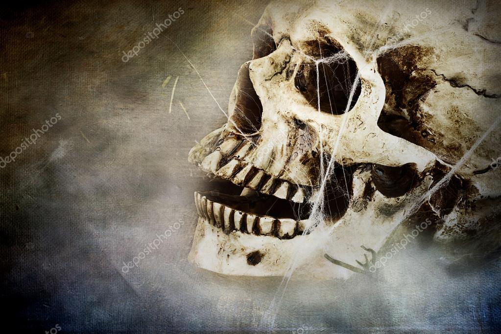 Spooky skull with spider webs. Room for copy space. — Stock Photo #12403837