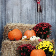 Stock Photo: Pumpkins on Straw Bales