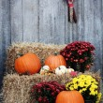 Pumpkins on Straw Bales — Stock Photo