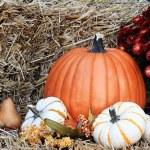 Pumpkins and Chrysanthemums — Stock Photo