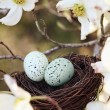 Springtime Nest — Stock Photo #18695983