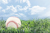Baseball in Grass — Stock Photo