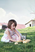 Child Playing with Chicks — Stock Photo