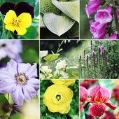 Flowers and Plants Collage — Stock Photo