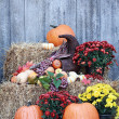 Cornucopia Still Life — Stock Photo