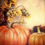 Pretty Autumn Display — Stock Photo