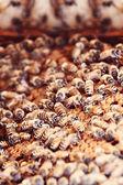 Honungsbin på en kam — Stockfoto