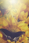 Sunflowers and Butterflies in Retro — Stock Photo