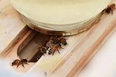 Bee Feeder — Stock Photo
