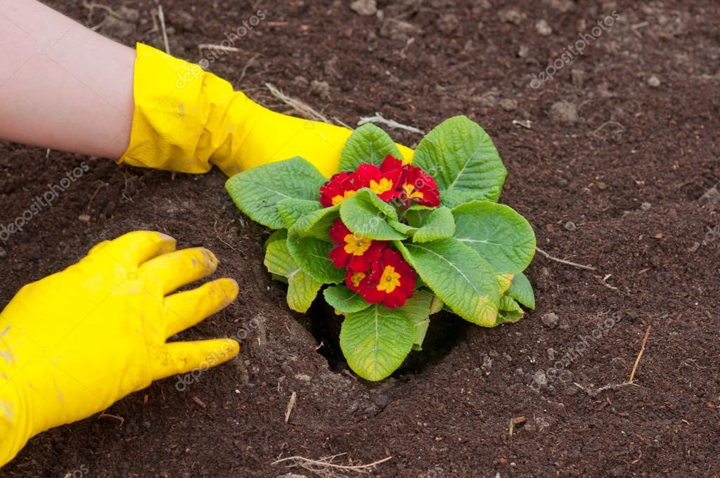 Фото посадка цветов
