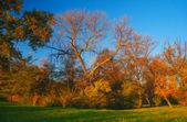 Peinture de paysage montrant la forêt sur une journée ensoleillée d'automne — Photo