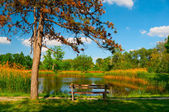 Beautiful summer landscape with lake and wooden bench. — Stock Photo