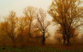 Creepy landscape painting showing dark forest in autumn. — Stock Photo
