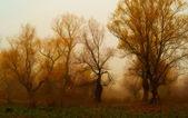 Pintura de paisaje espeluznante mostrando bosque oscuro en otoño. — Foto de Stock