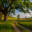 Beautiful summer landscape showing huge old oak beside country road — Stock Photo #22431755