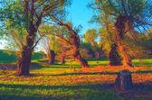 Landskap målning visar gamla skogen solig vårdag — Stockfoto