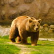 Stock Photo: Brown bear in zoo on sunny spring day