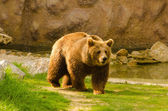 Brown bear in the zoo on sunny spring day — Stock Photo