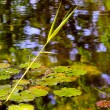 Water lilies and various plants in the swamp on beautiful spring day - Stock Photo